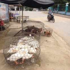 Vietnam Motortour (561)